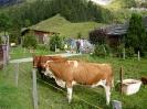 Turnfahrt Grindelwald 2014_13